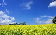 imagens de campos floridos - Pesquisa Google