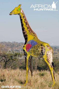Grands gibiers africains - Le blog de Alex.bowhunter Giraffe For Kids, Cute Giraffe, Giraffe Facts, Cartoon Giraffe, Giraffe Heart, Africa Hunting, Love Heart Tattoo, Columbus Zoo, Bow Hunting