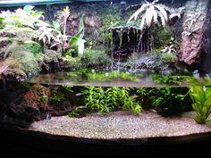 thoughts on paludarium/river tank - Aquarium Advice - Aquarium Forum Community