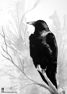 raven. I like that it's black and white.