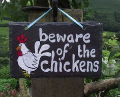 Slate Sign Beware of the chickens Reclaimed slate by quincepie, Chicken Coop Signs, Chicken Pen, Chicken Crafts, Chicken Lady, Chicken Coops, Chicken Humor, Raising Ducks, Raising Chickens, Slate Signs