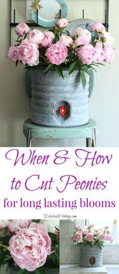 When to Cut Peonies for long lasting indoor arrangements {wineglasswriter.com}