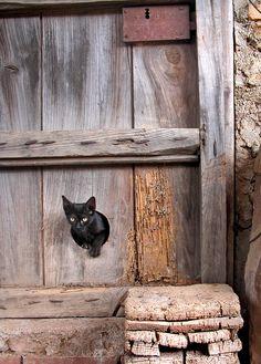 gato Adorable Animals, Animal Kingdom, Nostalgia, Reading, Cats, Books, Photography, Rustic Style, Club