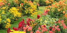 Don't give up on pretty blooms just yet.  Flowers to plant in the fall