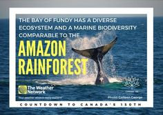 The waters of the Bay of Fundy are home to up to 12 species of whales, an abundance of dolphins, porpoises, fish, seals, seabirds and more. Great 🇨🇦 fact 85/150 #Canada150 #Canadafacts