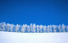 Snow Forest Wallpaper