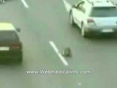 Hero dog saves another dog after it was hit by a car.  The dog who got hit survives thanks to his dog friend!