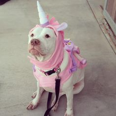 Perro pitbull disfrazado de unicornio