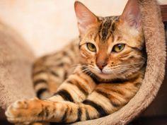 Durchfall bei Katzen kann verschiedene Ursachen haben. Die endgültige Antwort weiß der Tierarzt – Bild: Shutterstock / Shvaygert Ekaterina