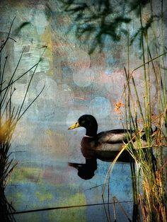 'Mallard' by Lisa S. Baker