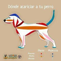 Donde acariciar a tu perro