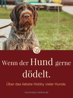Lob des Dödelns Hundeverhalten | Gassigehen | Hund | Hundeschule #Hund #Hundeverhalten #Hundepsychologie #Hundeschule Yorkie, First Photo, Dog Owners, Lob, Good To Know, Best Dogs, Animals, Halter, Needful Things