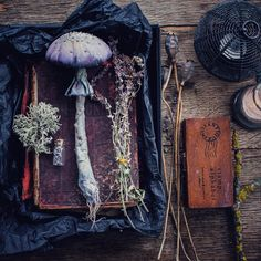Witchy aesthetic 🌙 — Photo:… – Candle Making Wiccan, Magick, Witchcraft, Pagan Altar, Nature Witch, Nature Nature, Hedge Witch, Witch Aesthetic, Aesthetic Photo