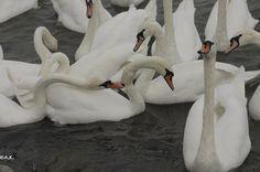 Donauinsel Bird, Pets, Photography, Animals, Island, Photograph, Animales, Animaux, Birds