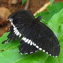 220px-Butterfly1@BP.JPG (220×219)