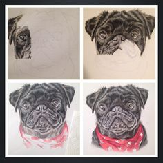 4 stages of my drawing . The first 2 pics have bad lighting. #wip #progress #drawing #colouredpencils #pug #pugsofinstagram #redscarf #dog #puppy #petportrait #portrait #artshare #artshare_ig #art___share #creativepeople #talnts #talentedpeopleinc #art_empire #art_collective #art_spotlight #art_help #art_worldly #draw #drawingoftheday #drawsomething #polychromos #derwent #artgallery #art_draw #art_motive by tori_art1