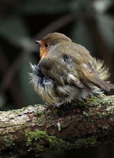 The Enchanted Cove Kinds Of Birds, Love Birds, Beautiful Birds, Enchanted, European Robin, Walk In The Woods, All Gods Creatures, Woodland Creatures, Little Birds