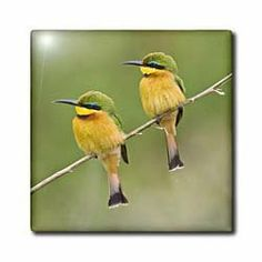 """Africa. Tanzania. Little Bee Eaters at Manyara NP-AF45 RBE0162 - Ralph H. Bendjebar - 12 Inch Ceramic Tile by 3dRose. $22.99. Construction grade. Floor installation not recommended.. High gloss finish. Image applied to the top surface. Dimensions: 12"""" H x 12"""" W x 1/4"""" D. Clean with mild detergent. Africa. Tanzania. Little Bee Eaters at Manyara NP-AF45 RBE0162 - Ralph H. Bendjebar Tile is great for a backsplash, countertop or as an accent. This commercial quality constructio..."""