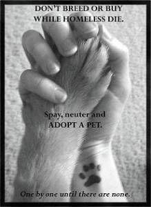 Don't breed or buy while homeless pets die. Adopt, don't shop. Spay & neuter.