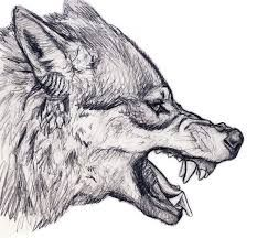 Image result for drawing wolf