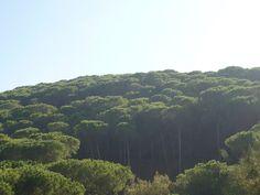 Living in Sicily - Vardag På Sicilien