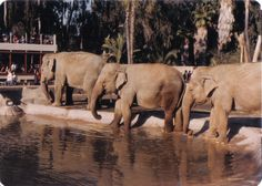 Zoo Tails: Vintage Zoo Pictures: San Diego Zoo 1984