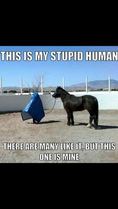 Says every horse I've ever had
