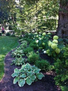 Shady yard with Hostas Hydrangeas – might look good in our shady front yard! #shadegarden