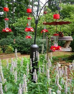 A variety of hummingbird feeders