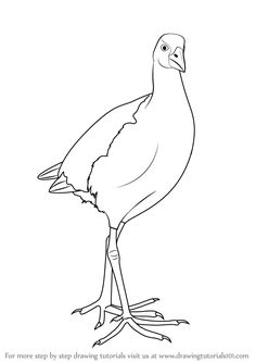 pukeko clipart - Google Search | AVES | Coloring apps ...