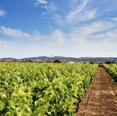 viñedo en el Penedés Vineyard, Travel, Outdoor, History Of Wine, Wine Cellars, Paths, Outdoors, Viajes, Vine Yard