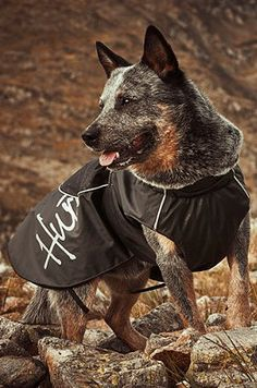 The Winter Dog Jacket keeps your pet's chest and abdomen warm and comfortable on cold winter days
