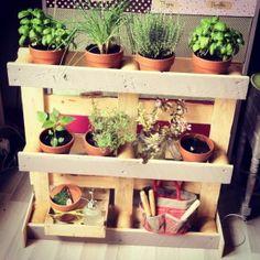 Jardin d'intérieur, bricolage complet sur http://www.veganbox.fr/bricolage-jardin-dinterieur/ :)