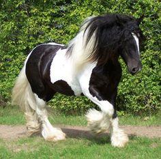Google Afbeeldingen resultaat voor http://images.aanbod.be/gallery/612x463-0/b01af3/paarden-te-koop.jpg