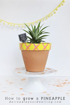 How to Grow a Pineapple, Delineate Your Dwelling