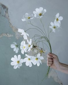 The Fine Art of Paper Flowers – The Colossal Shop