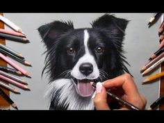 How to draw a border collie - YouTube
