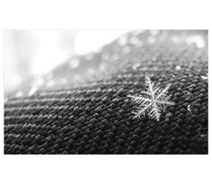 Snowflake... by TheFidoDidoGerbil.deviantart.com on @deviantART