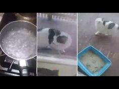 Recopilación de Animales Bebés - Afecto Animal. - YouTube