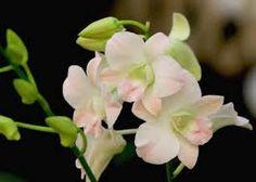jpg Hi-Res HD Love Flowers, Beautiful Flowers, Orchid Flowers, Flower Images, Flora, Peach, Rose, Plants, Butterflies