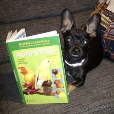 Te regalo el libro que tú quieras - Sorteo internacional de 2 libros   Las Lecturas de Mr. Davidmore
