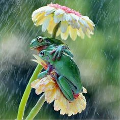 27 superb images from the National Geographic Traveler Photo Contest Frog BFF's huddle under their daisy umbrella! Animals And Pets, Baby Animals, Funny Animals, Cute Animals, Spring Animals, Green Animals, Beautiful Creatures, Animals Beautiful, Beautiful Cats