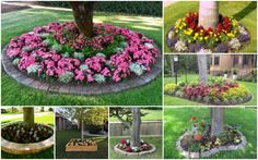 Making some flower beds around trees may seem to you like a simple process, but…