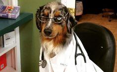 Cost of Veterinary Care