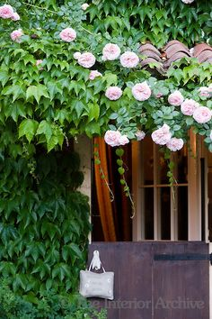 A 'Pierre de Ronsard' (Rosa) grows over the stable door entrance