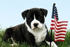 The Congressional Animal Protection Caucus: Speaking Up for Animals on Capitol Hill