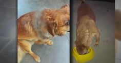 Quiero justicia para este perrito que fue casi cortado a la mitad y murió!