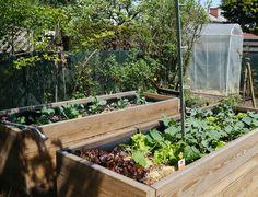 Hochbeet anlegen - Seite 1 - Gartengestaltung - Mein schöner Garten online
