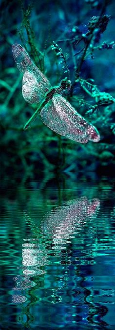This emerald green #dragonfly #reflection picture is amazing-  #stunning capture! www.ArtNouv.com