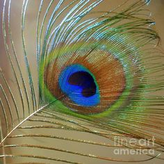 A Peacock Eye by Mary Deal